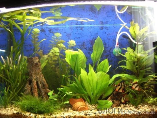 Посадка растений в аквариум основные