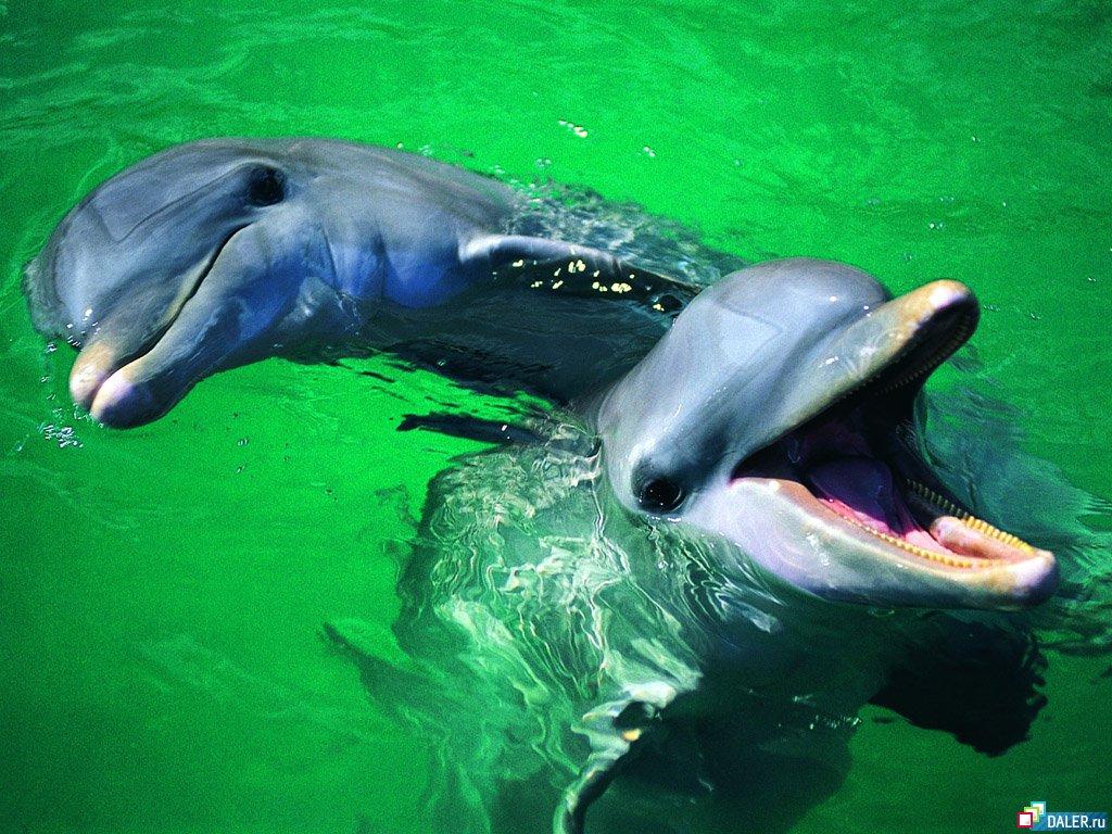 Дельфины и секс