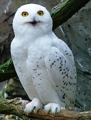В какой стране использовали для почтовых переписок полярную сову?