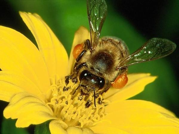 Как узнать настоящий мед?