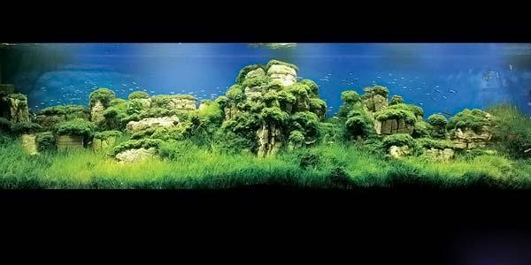 Фото № 1 Японский аквариум Такаши Амано 90 фото