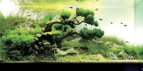 Фото № 3 Японский аквариум Такаши Амано 90 фото