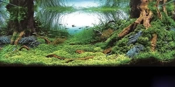 Фото № 4 Японский аквариум Такаши Амано 90 фото