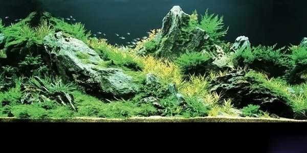 Фото № 6 Японский аквариум Такаши Амано 90 фото
