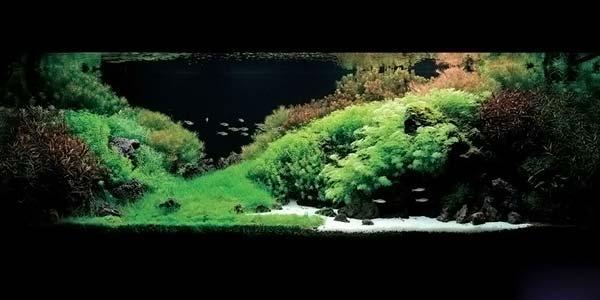 Фото № 8 Японский аквариум Такаши Амано 90 фото