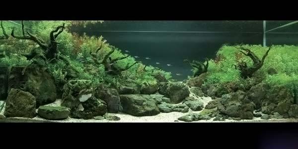 Фото № 9 Японский аквариум Такаши Амано 90 фото