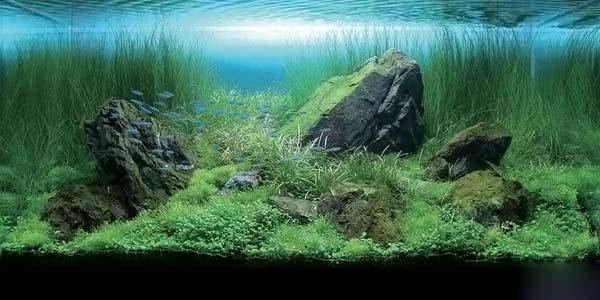 Фото № 10 Японский аквариум Такаши Амано 90 фото