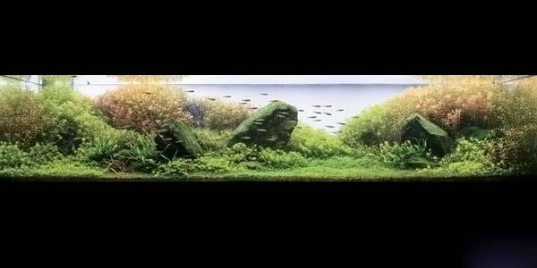 Фото № 11 Японский аквариум Такаши Амано 90 фото