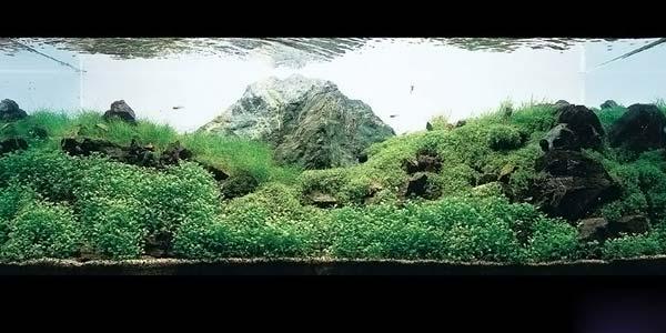 Фото № 13 Японский аквариум Такаши Амано 90 фото