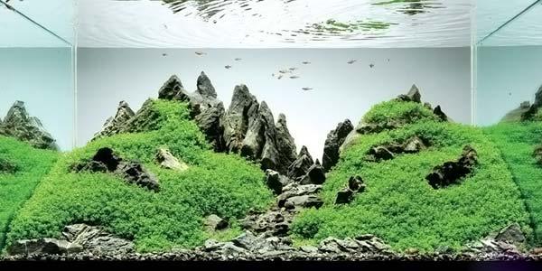 Фото № 15 Японский аквариум Такаши Амано 90 фото