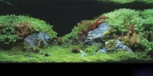 Фото № 16 Японский аквариум Такаши Амано 90 фото
