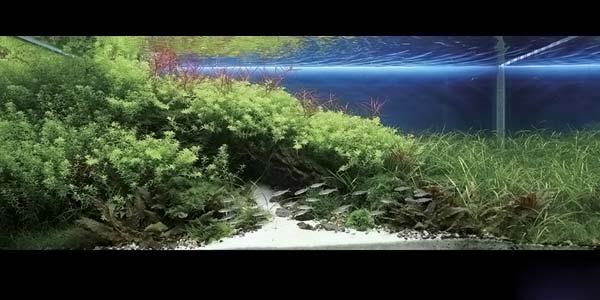 Фото № 17 Японский аквариум Такаши Амано 90 фото