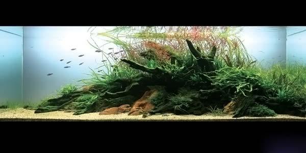 Фото № 18 Японский аквариум Такаши Амано 90 фото