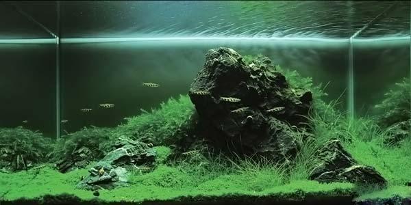 Фото № 19 Японский аквариум Такаши Амано 90 фото