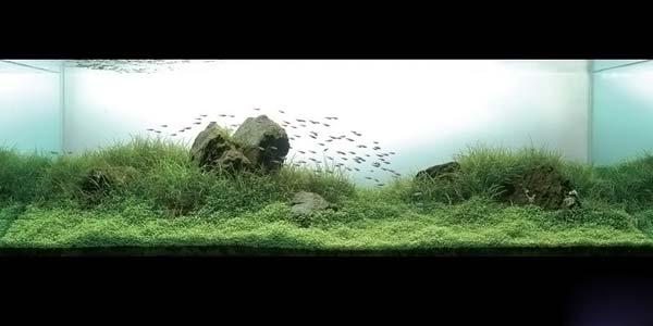 Фото № 20 Японский аквариум Такаши Амано 90 фото