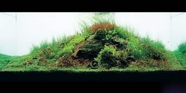 Фото № 21 Японский аквариум Такаши Амано 90 фото