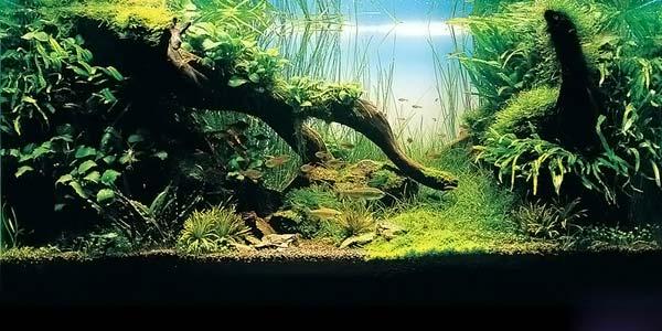Фото № 24 Японский аквариум Такаши Амано 90 фото