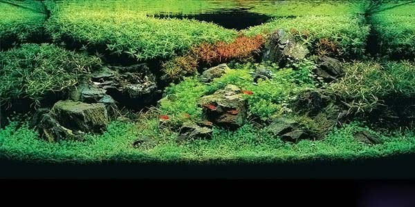 Фото № 26 Японский аквариум Такаши Амано 90 фото