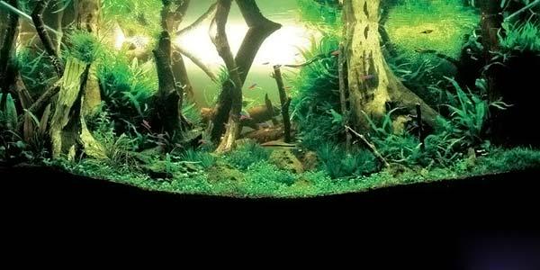 Фото № 27 Японский аквариум Такаши Амано 90 фото