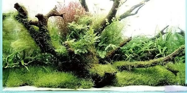 Фото № 28 Японский аквариум Такаши Амано 90 фото