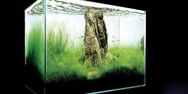 Фото № 32 Японский аквариум Такаши Амано 90 фото