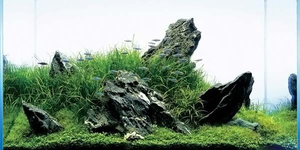 Фото № 33 Японский аквариум Такаши Амано 90 фото