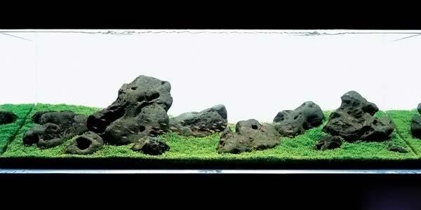 Фото № 35 Японский аквариум Такаши Амано 90 фото