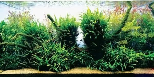 Фото № 36 Японский аквариум Такаши Амано 90 фото