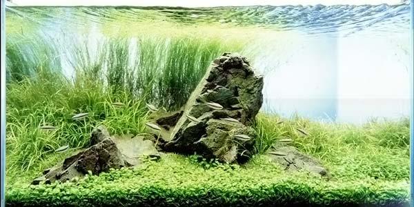 Фото № 37 Японский аквариум Такаши Амано 90 фото