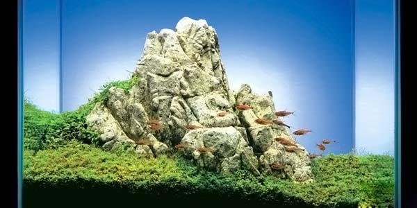 Фото № 39 Японский аквариум Такаши Амано 90 фото