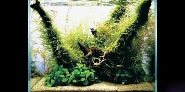 Фото № 40 Японский аквариум Такаши Амано 90 фото