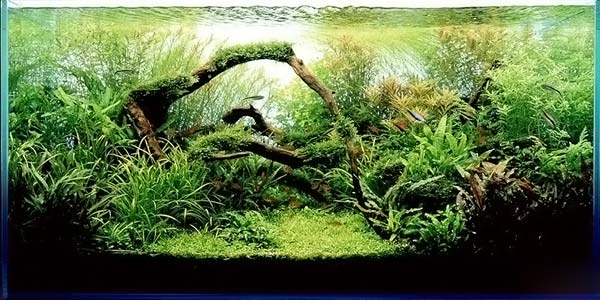 Фото № 42 Японский аквариум Такаши Амано 90 фото