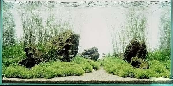 Фото № 43 Японский аквариум Такаши Амано 90 фото