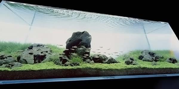 Фото № 44 Японский аквариум Такаши Амано 90 фото