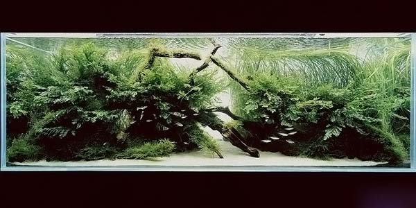 Фото № 46 Японский аквариум Такаши Амано 90 фото