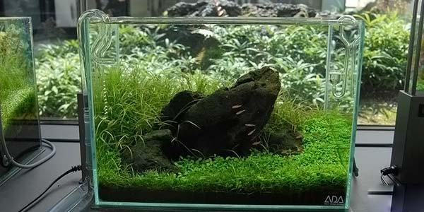 Фото № 48 Японский аквариум Такаши Амано 90 фото