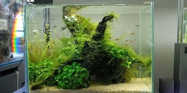 Фото № 49 Японский аквариум Такаши Амано 90 фото