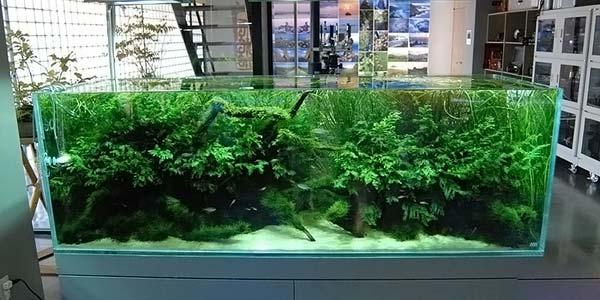 Фото № 50 Японский аквариум Такаши Амано 90 фото