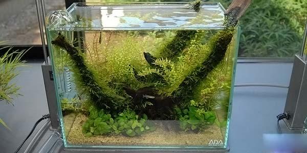 Фото № 51 Японский аквариум Такаши Амано 90 фото