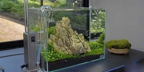 Фото № 52 Японский аквариум Такаши Амано 90 фото
