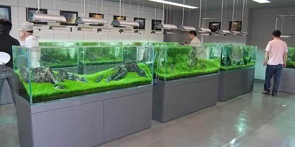 Фото № 53 Японский аквариум Такаши Амано 90 фото