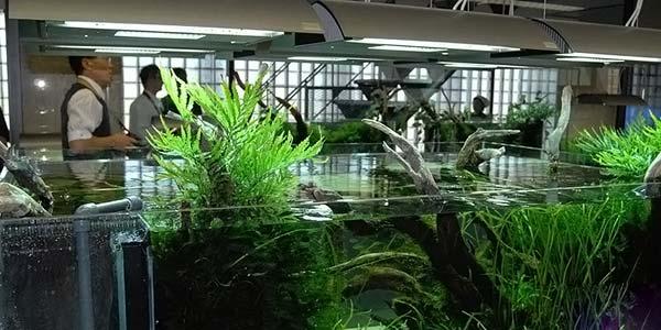Фото № 54 Японский аквариум Такаши Амано 90 фото