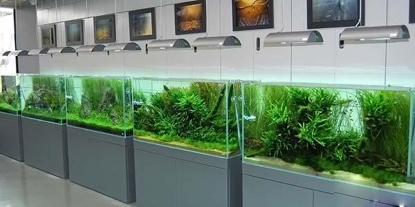 Фото № 55 Японский аквариум Такаши Амано 90 фото