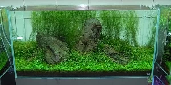 Фото № 56 Японский аквариум Такаши Амано 90 фото