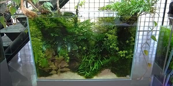 Фото № 57 Японский аквариум Такаши Амано 90 фото