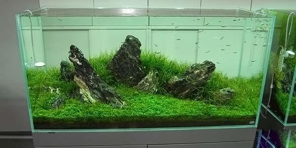 Фото № 58 Японский аквариум Такаши Амано 90 фото