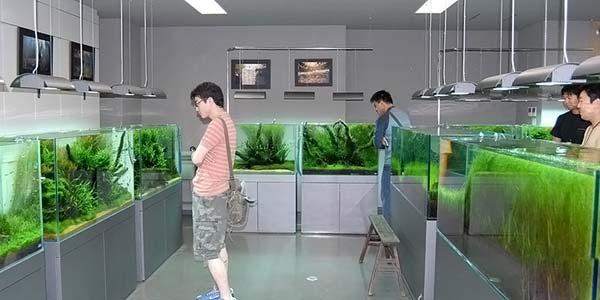 Фото № 59 Японский аквариум Такаши Амано 90 фото