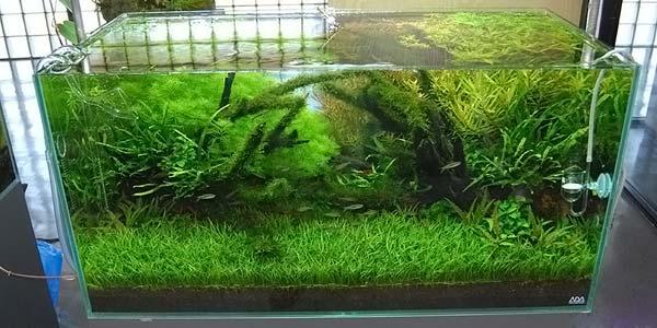 Фото № 60 Японский аквариум Такаши Амано 90 фото