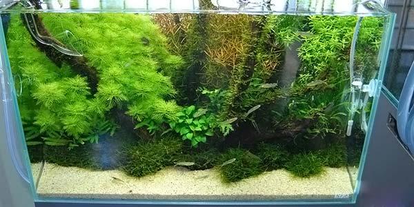 Фото № 61 Японский аквариум Такаши Амано 90 фото