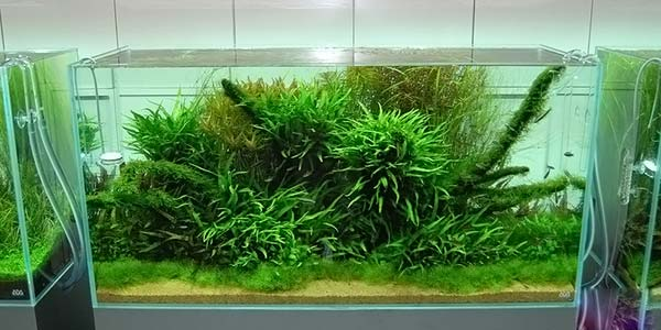 Фото № 62 Японский аквариум Такаши Амано 90 фото